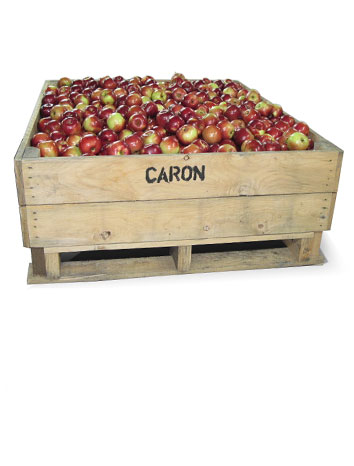 Whole apples 360 lbs