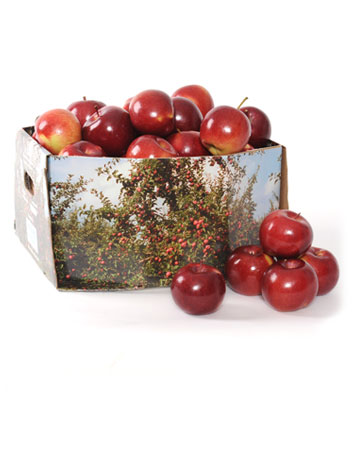 Whole apples - ½ bushel ( 18 lbs )